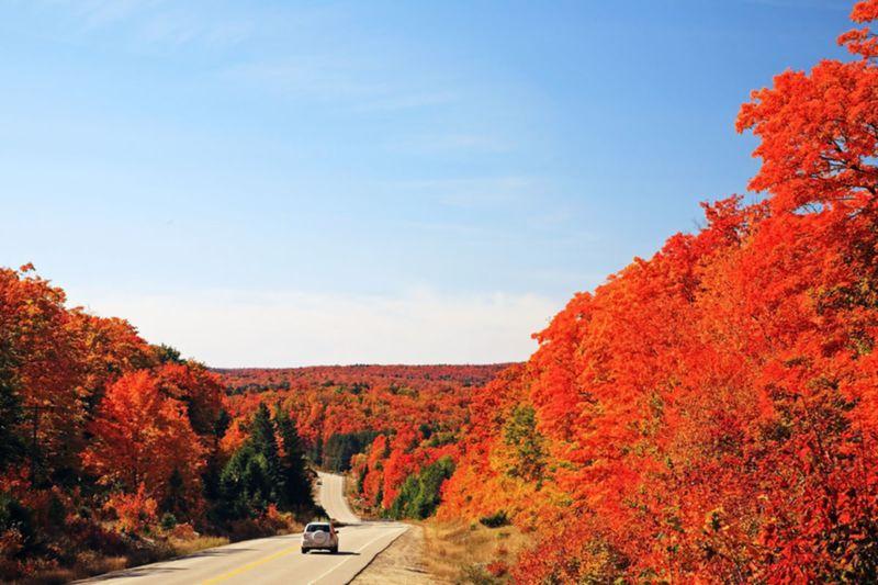 Algonquin, le plus grand des parcs provinciaux de l'Ontario